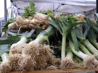 Leeks_resized_PC020843